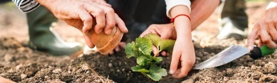 Plant the Seed: Good Nutrition through Gardening
